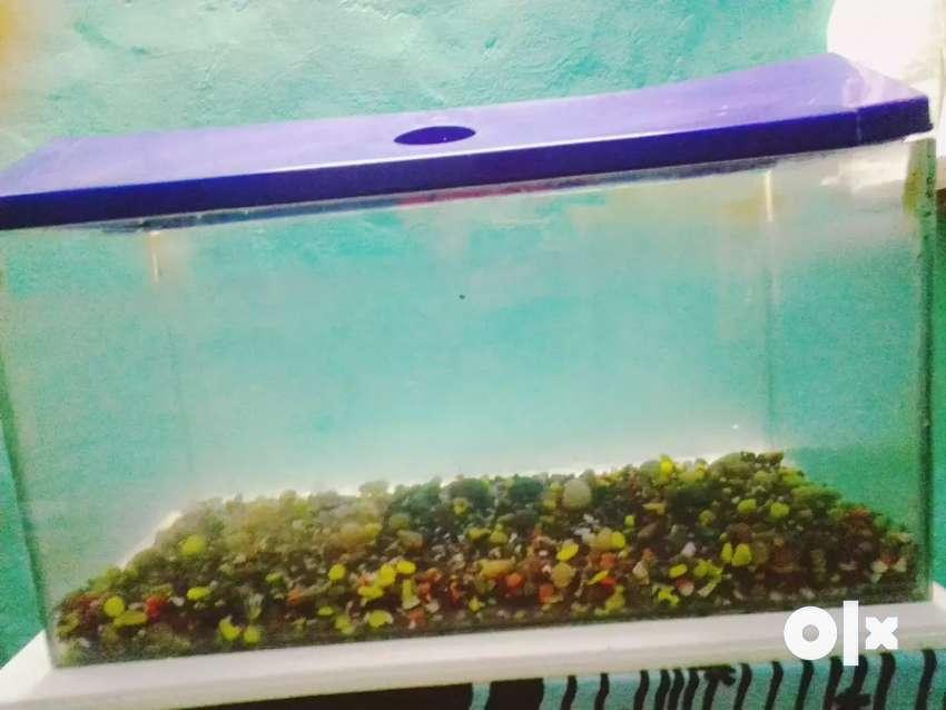 Big aquarium 0