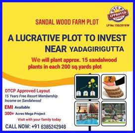 Invest in Sandalwood farm plots Get a high Return
