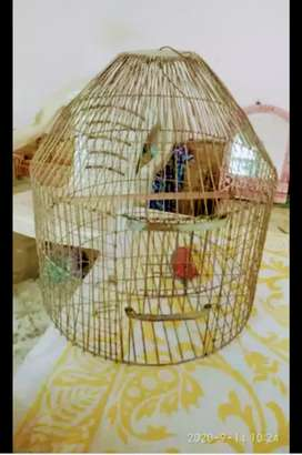 Bird pinjra for sell