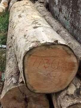 Wood logs 900