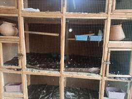 Cage for birds |WOOD CAGE |  size 2 by 6 ft|  all facility in one cage