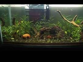 Planted Aquerium 4feet Tank