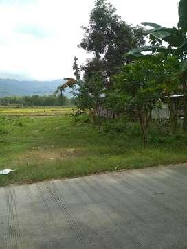 Tanah di Bayat Klaten kebun sawah