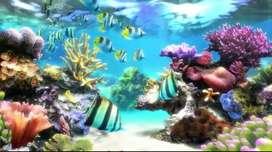 Dekorasi Biota Aquarium Laut Dalam