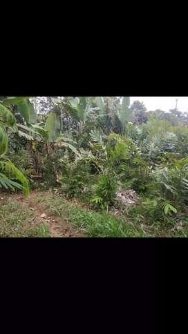 Jual Tanah ada pohon salak siap panen lokasi Gisting Permai