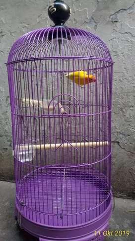 Love bird fullset