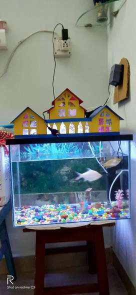 Aquarium of 14*18 inch
