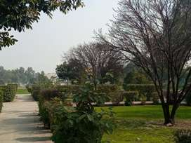 2 KANAL PLOT FOR SELL ON MAIN BOULEVARD CHINARBAGH