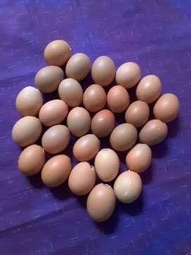 Jual cangkang telur bekas