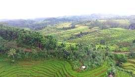 Tanah darat dan luas khusus industri