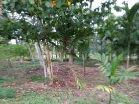 1 Acre Residential Land for sale at Valayanchirangara, Ernakulam