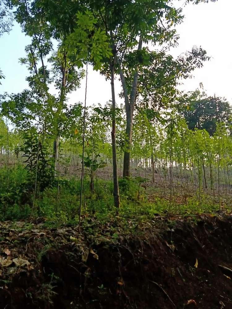 tanah kosong lahan perkebunan