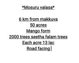 Mosuruvalasa 50 acres