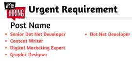 We are hiring for Startup IT Company