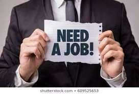 Need a designer job
