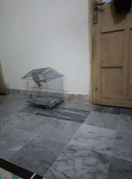 Brand new house in lalazar wahcant 16