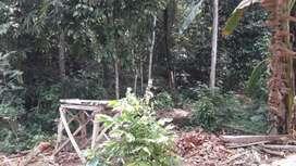 TANAH MURAH MENGUNTUNGKAN  Di Kedung Banteng Purwokerto