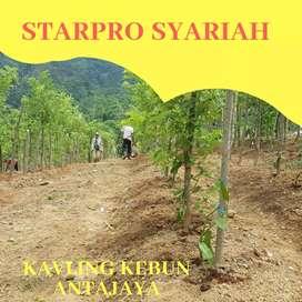 Jual kavling durian musangking Cibubur junction