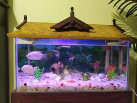 Aquarium with fish and stand