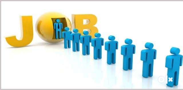 Internship for freshers in IT company 0