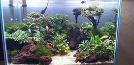 Aquarium ukuran 40cm,umur 3 bulan