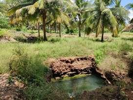 Coconut farm 2.30acre sale