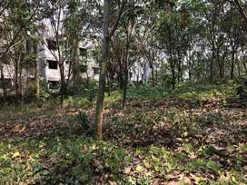 Rubber plantation for sale at Aluva-Perumbavoor,Ernakulam