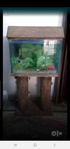 Wooden aquarium beautiful with wooden stand
