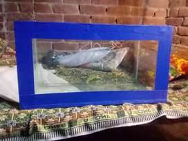 Fish akrume for sall