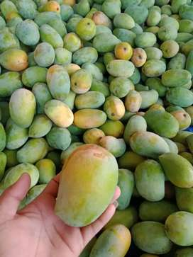 India Fresh Mango With Naturaly Rippen