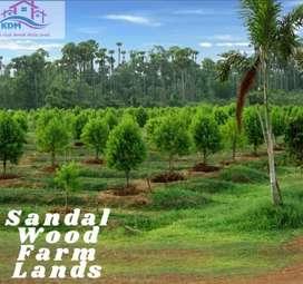 Sandalwood farm plot near shadnagar per sq yard 5,500