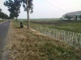 Tanah Sawah di jual pinggir jalan.lebar muka 20 mtr.di sebelah SMA