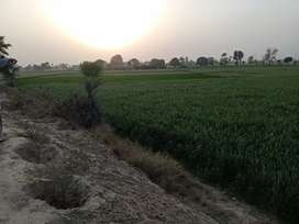 1.5 acre zarai zameen for sale