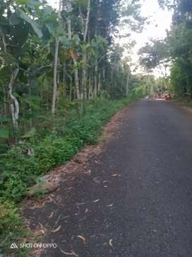Di Jual Tanah Utara Jalan JLS Panggang Gunung Kidul