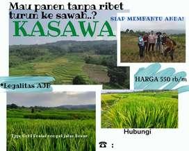 Cluster kasawa ( kavling sawah )