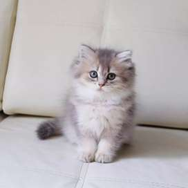 All colour kittens for sale
