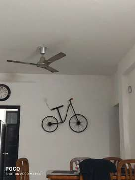 Home decor wall Cycle with light