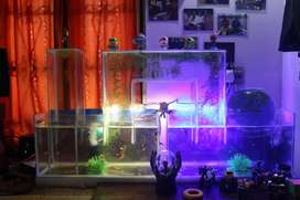 Customised glass aquascapes and fish home decors