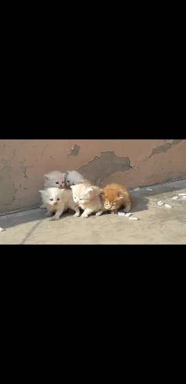 Russian Cats