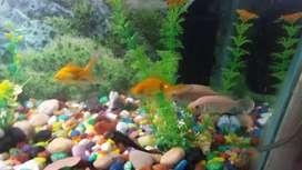 Fish aquarium 12 inch× 22 inch
