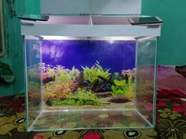 Fish tank aquriaum