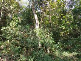 14 acre land covered with jungle trees for sale in sakleshpura