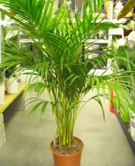 Various plants palms and indoor big plants