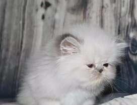 So very intelligent kitten