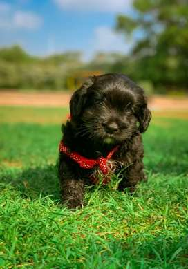 This Dog Breed name terrier