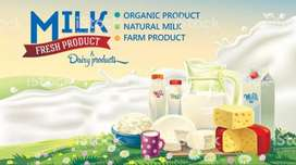 100% Pure Milk Sale