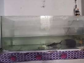 Want to sell big aquarium with 2 gold fish and 1 shark