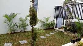 Jasa tukang taman rumah-jual rumput taman dan tanaman hias