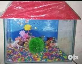 1.5FT aquarium for sale
