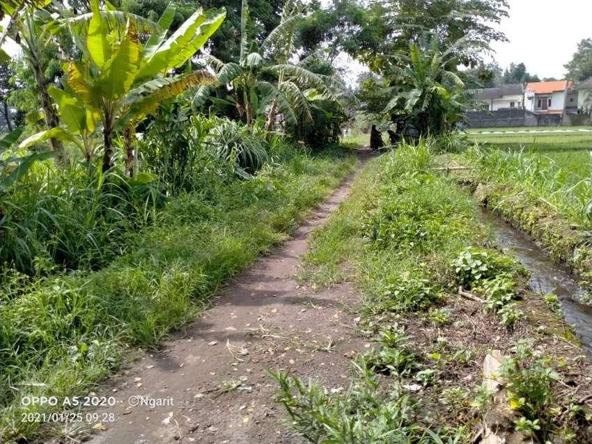 Tanah SHM Sawah Dijual Murah Luasan 900m Lokasi Taraman Sleman